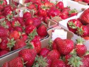 Meie parimad maasikad